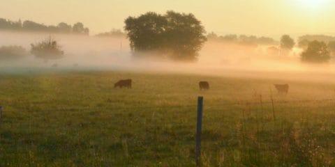 Entre câlinage de vaches et dégustation de vins : les charmes du camping à la ferme