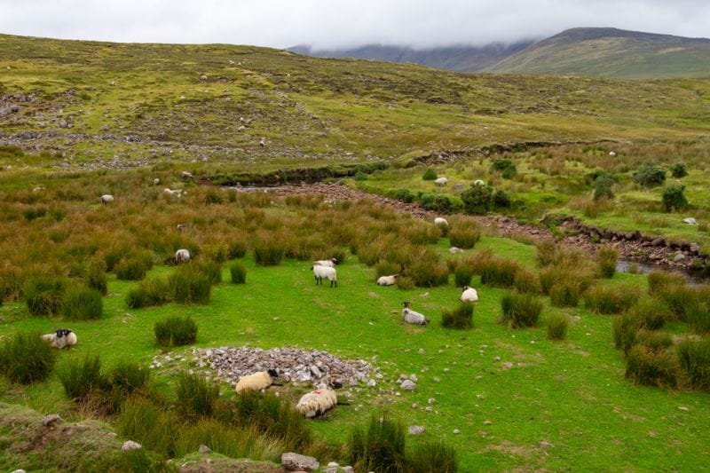 Les Voies Vertes britanniques, appelées « Greenways » vous font découvrir les paysages typiques du Royaume-Uni.